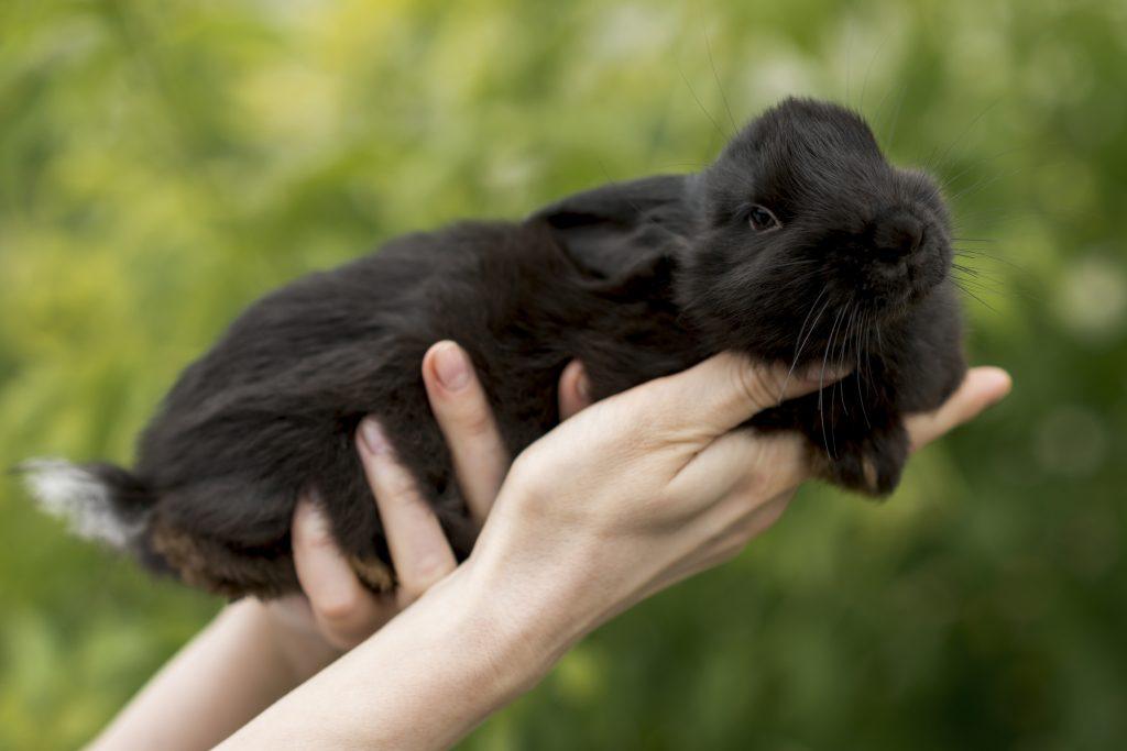 entender el lenguaje corporal de los conejos