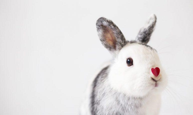 lenguaje corporal de los conejos