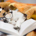Libros con animales como protagonistas
