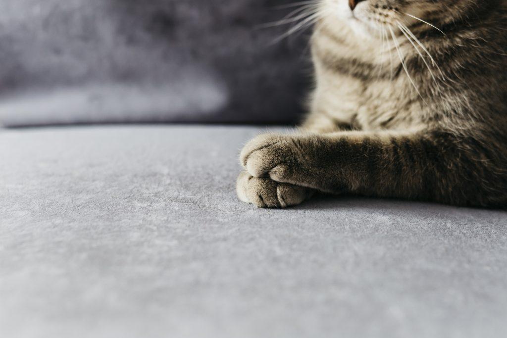cómo limpiar las patas de las mascotas