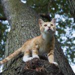 mi gato tiene miedo a las alturas