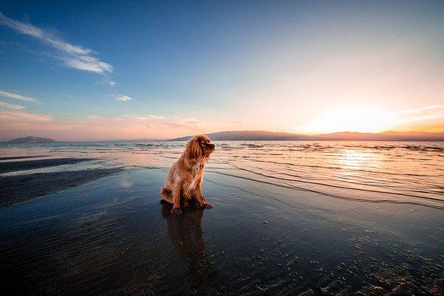 motivos por los que mi perro tiene miedo al agua