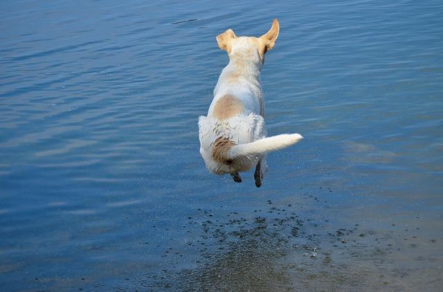 no puedes obligar a tu perro a entrar al agua