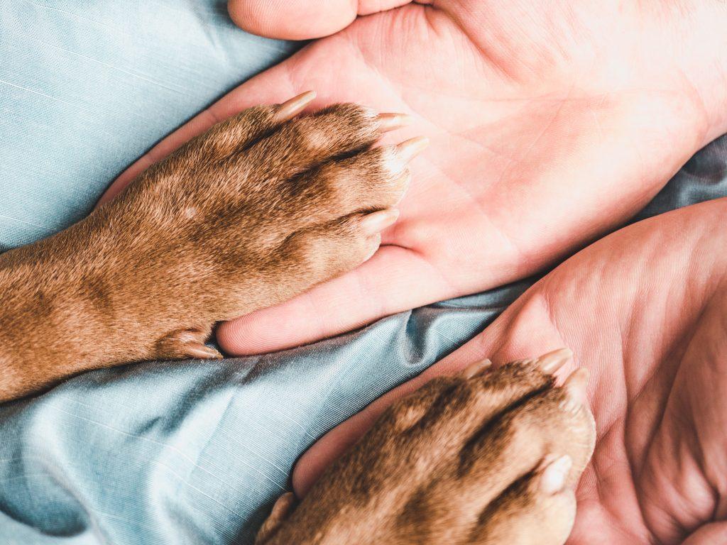 pasos para limpiar las patas de las mascotas