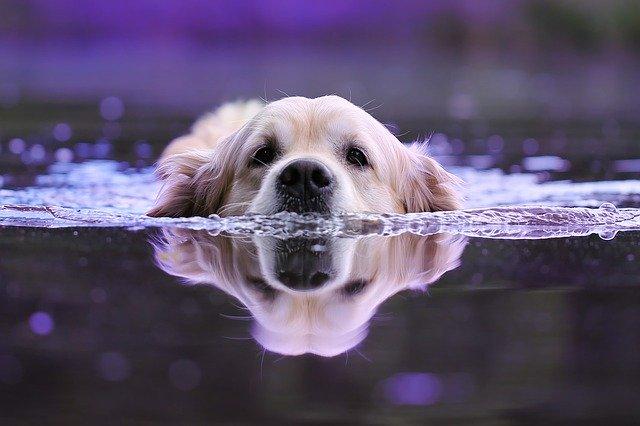 por qué mi perro tiene miedo al agua