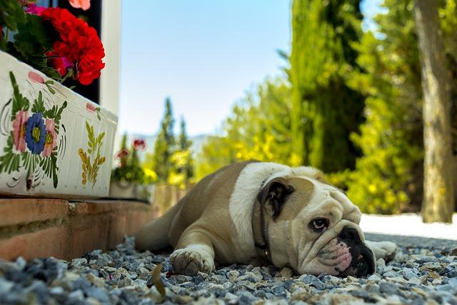 qué es la ataxia en perros