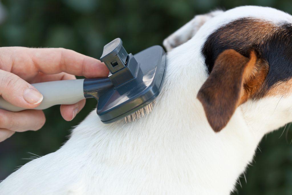 qué hago si mi perro tiene caspa