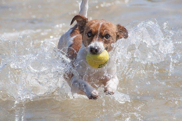 Qué hago si mi perro tiene miedo al agua