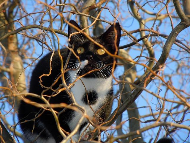 razones por las que un gato tiene miedo a las alturas