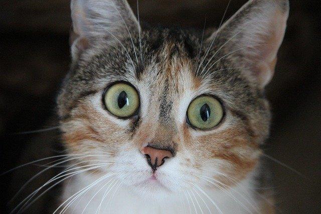 síntomas de la ansiedad por separación en gatos