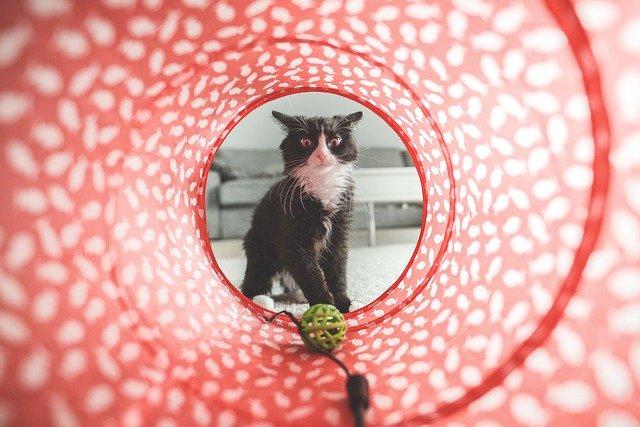 tratar la ansiedad por separación en gatos con diversión