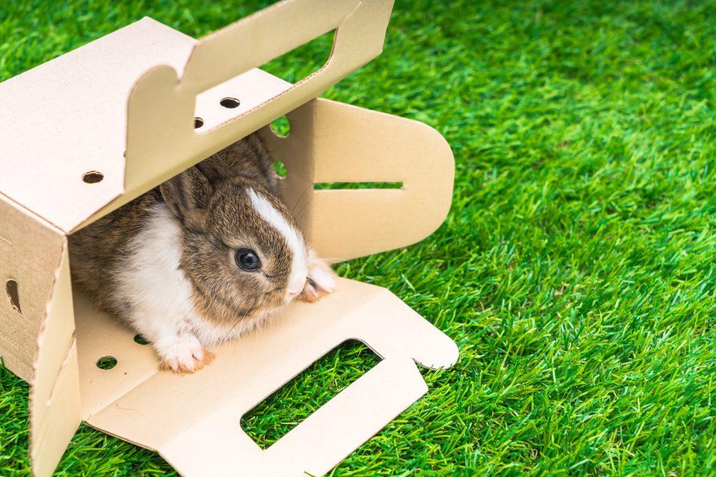 cajas de cartón para jugar con un conejo