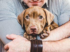 cómo disfrutar de un perro sin tenerlo en casa
