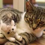 cómo evitar un embarazo psicológico en mascotas