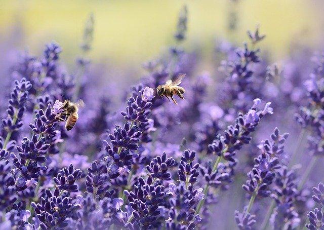 conoce la importancia de las abejas para el ecosistema