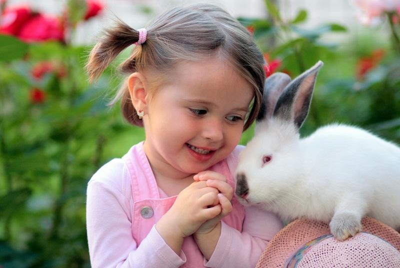 consejos para jugar con un conejo doméstico