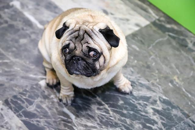 coronavirus canino enfermedades mortales en perros