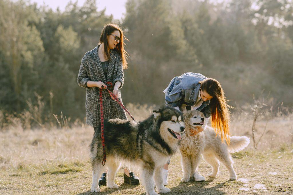 disfruta de un perro paseándolo