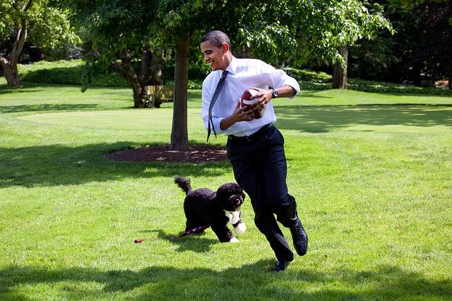 el perro de agua portugués es un perro muy activo