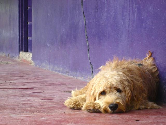 enfermedades mortales en perros gusano del corazón