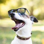 humanizar a las mascotas no es bueno