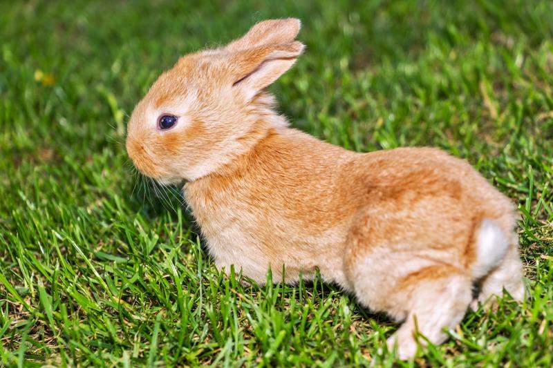 importancia de jugar con un conejo