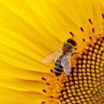 importancia de las abejas en el planeta