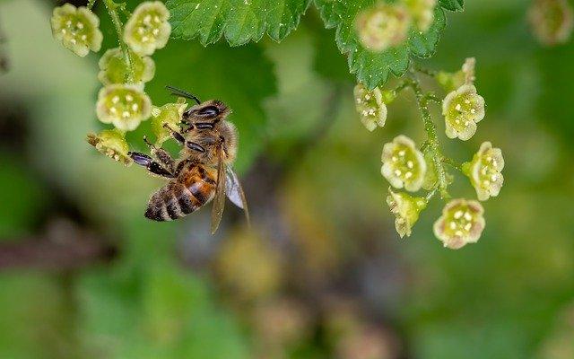 importancia de las abejas en la polinización