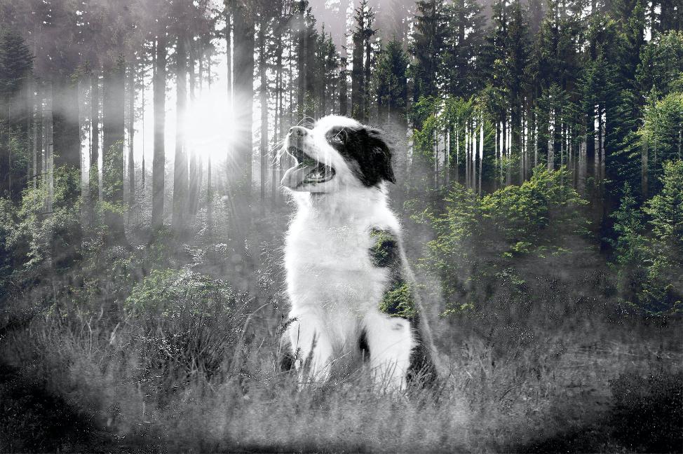 La importancia del olor natural de los perros y su instinto de protección