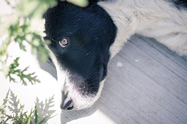 lista de enfermedades mortales en perros