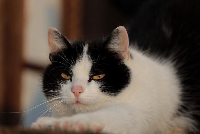 Los estornudos en los gatos