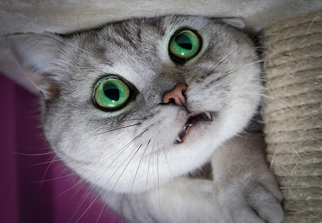 mi gato estornuda por infección