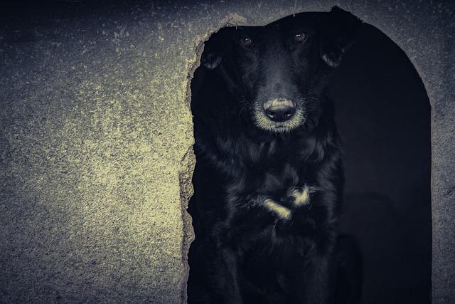 moquillo en perros enfermedades mortales en perros