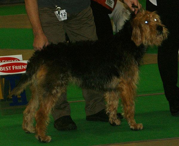 origen del perro Otterhound