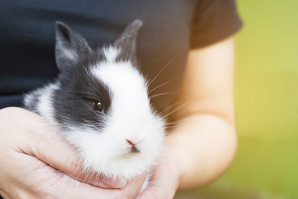para jugar con un conejo ten una actitud calmada