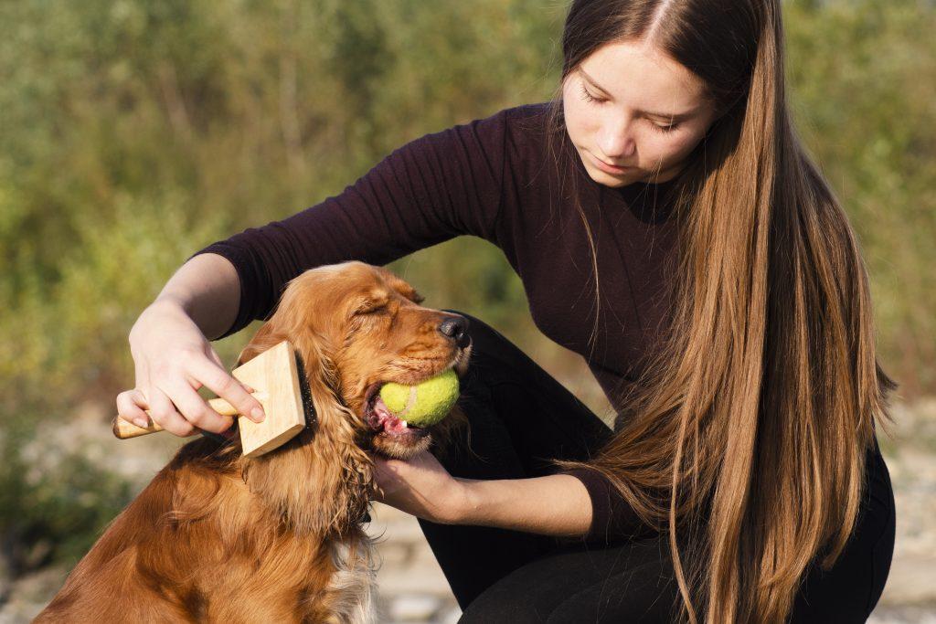 peina las orejas largas de tu perro