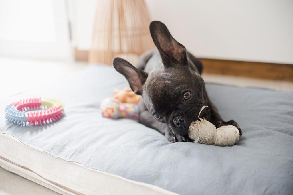 por qué debes evitar un embarazo psicológico en mascotas