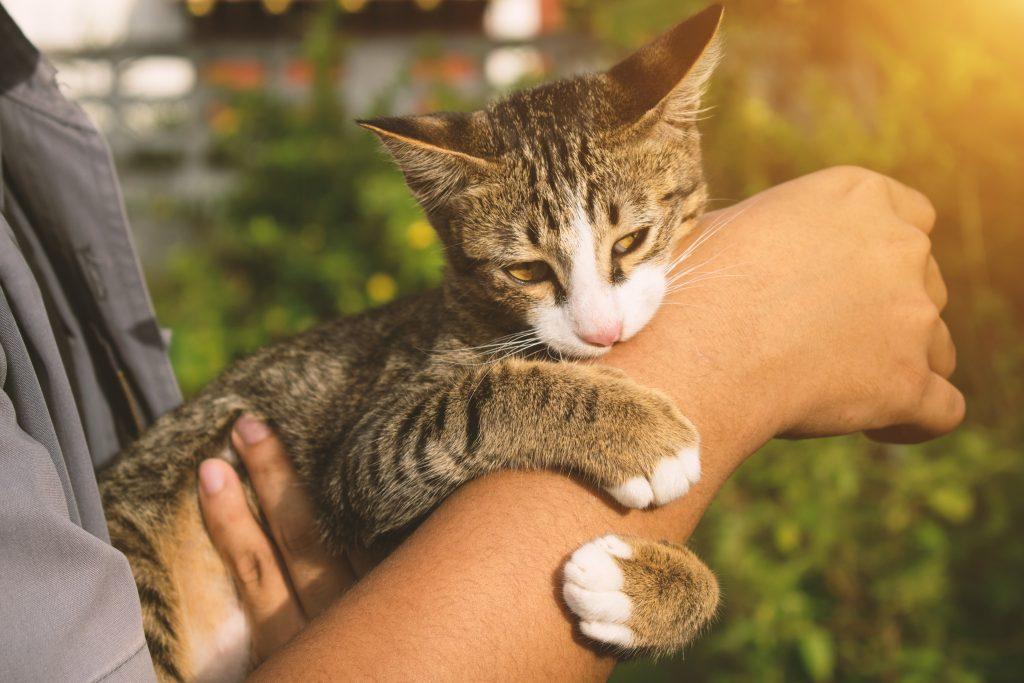 por qué mi gato me muerde las manos