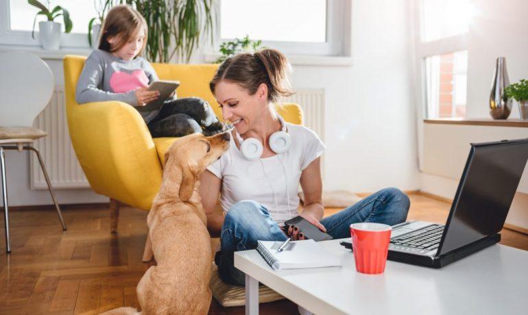 prepara a tu mascota para que no sufra con el desconfinamiento