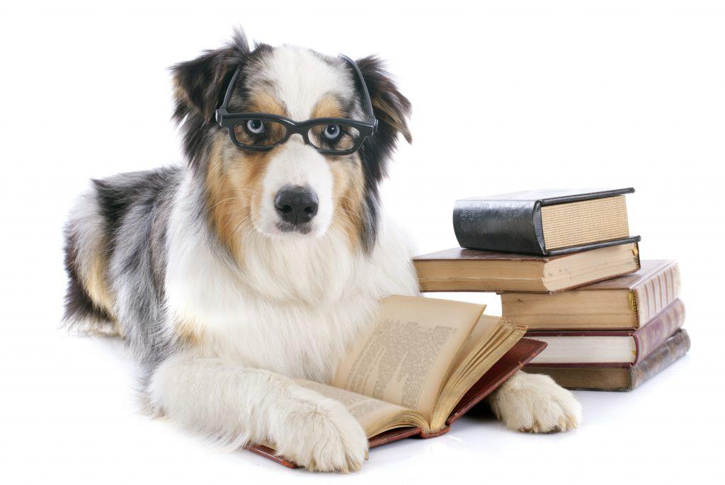 qué es humanizar a las mascotas