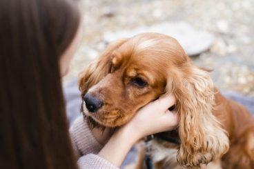 razas-de-perros-de-orejas-largas-mas-conocidas