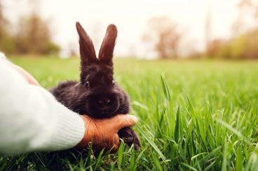 tips para jugar con un conejo doméstico