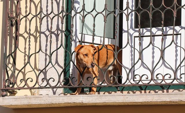 asegura los balcones si tienes mascota