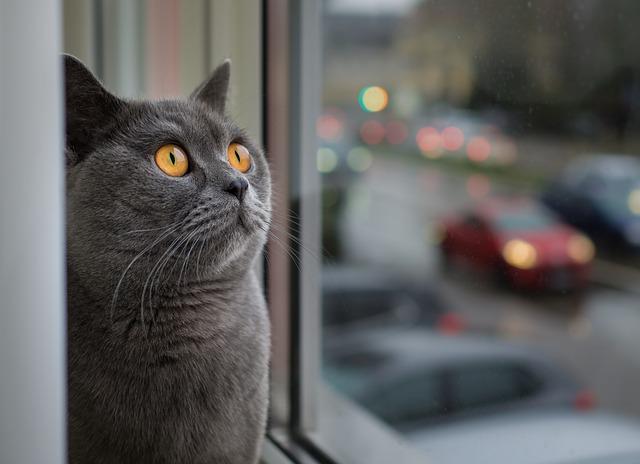asegura ventanas y balcones su vas a tener un gato