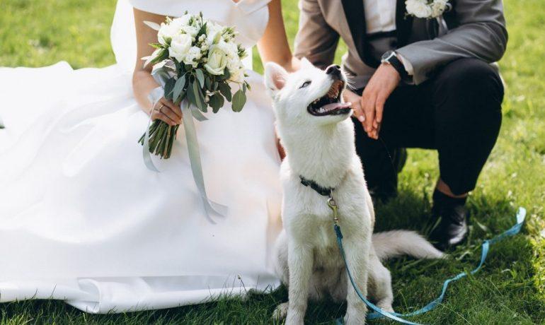cómo puedo hacer que esté mi perro en mi boda