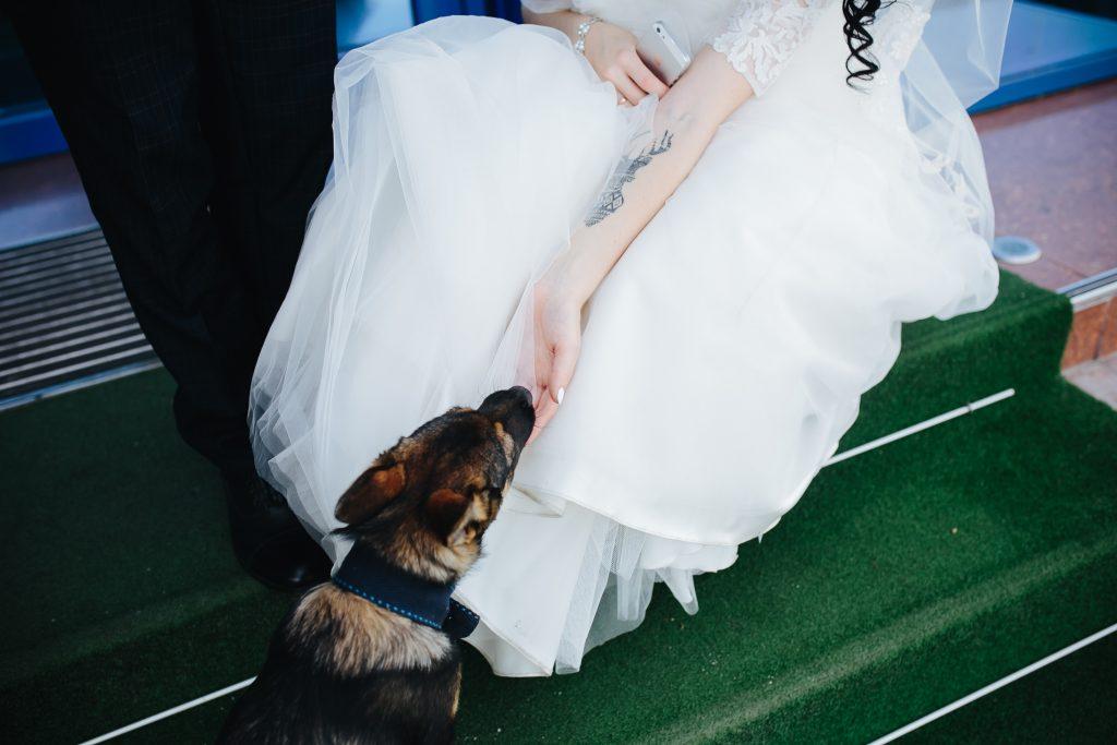 consejos para que tu perro esté en tu boda