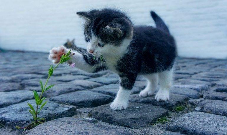 consejos si vas a tener un gato por primera vez