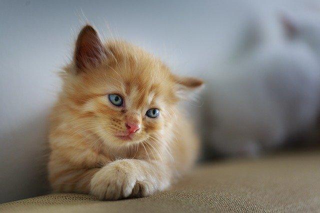 consideraciones si quieres tener un gato