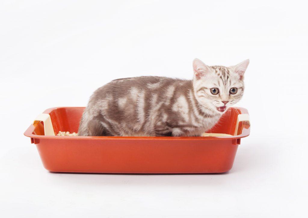 el cajón de arena es importante si vas a tener un gato