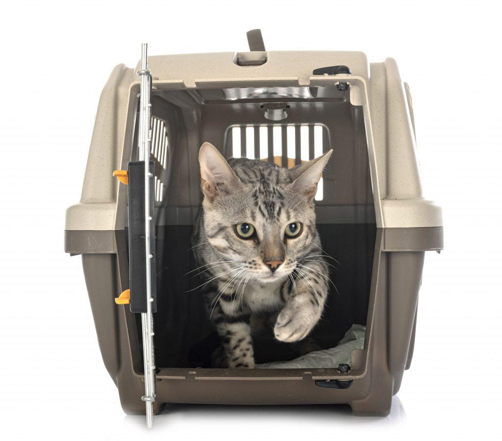 elige el transportín adecuado para viajar con gatos en avión